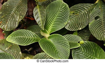 Plants with ridged leaves on the ra