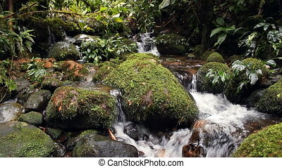 Waterfalls in a rainforest stream