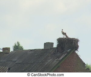 stork sit nest old house