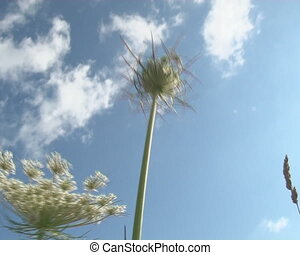 grassland flora windmill - Grassland flora and rotating...