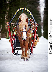 The horse harnessed in sledge in the winter afternoon