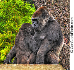 An HDR image of a mother and baby gorilla looking tenderly...
