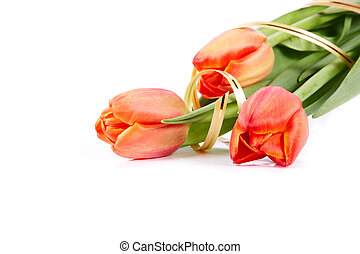 Bouquet of red tulips - The bouquet of red tulips with a...
