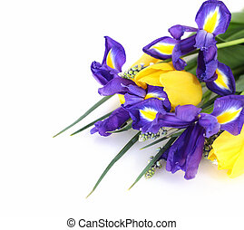 Beautiful dark purple iris flower, tulips and muscari...