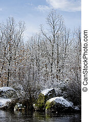 Snowy forest - Snow covered naked trees nearby small river