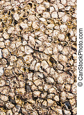 Shell rock solid background texture - Rock solid shell on...