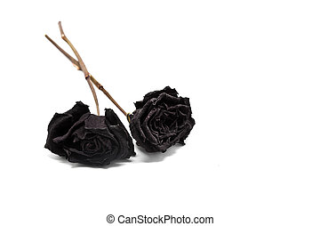 Black Withered Roses