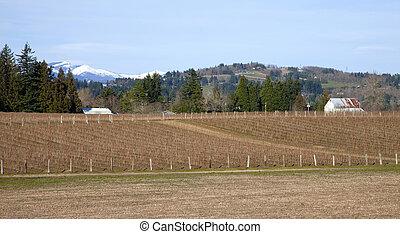 Raspberry field farmland, rural Oregon.