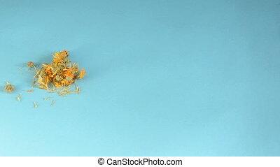 calendula, brier blow and chamomile herbs tea