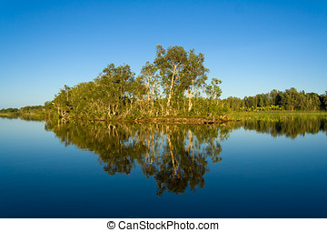 Reflexions - Reflections of tropical vegetation in the...