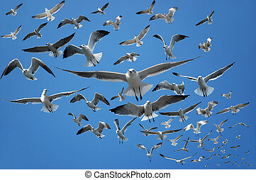 Seagulls - Flock of seagulls flying in the air