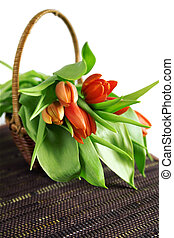 Beautiful red tulips and old basket isolated on a white background