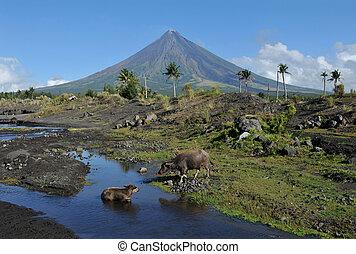monte, Mayon, vulcão