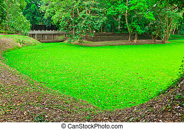 The pond of water lettuce in Sukhothai Historic Park,...