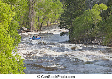 Springtime whitewater of Cache la Poudre River near Fort...