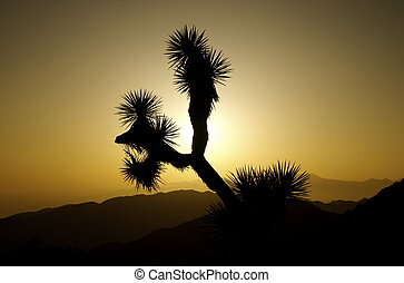 Joshua Tree Sunset Silhouette - Crazy interesting shapes...
