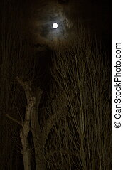 Full Moon Above Tree Tops - Full moon in a black sky against...