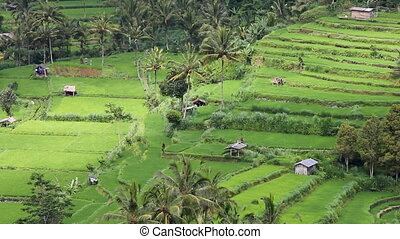 field terraces close to mount Agung, Bali, Indonesia