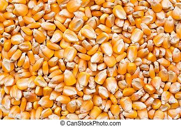 玉米, 種子, 背景