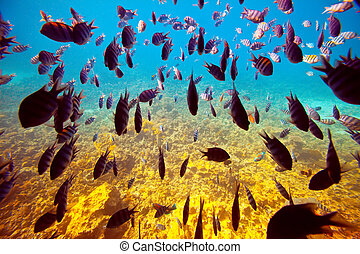 tropical fishes on coral reef