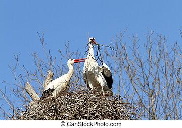 White stork - details of a white stork in the nest