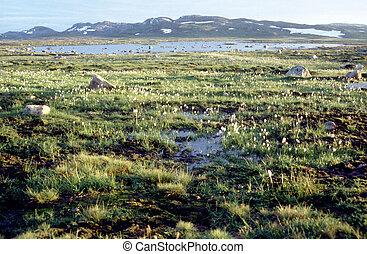 Lake and cottongrass in Hardanger-Vida, Norway - Lake and...