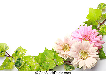 gerbera and ivy - I took gerbera and ivy in a white...