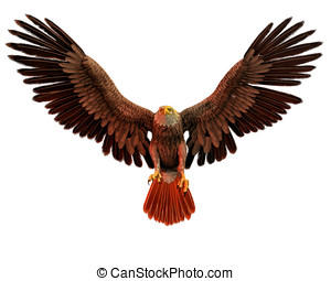 Bald Eagle in flight - North American Bald Eagle in flight...