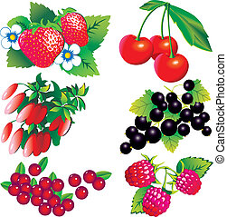 Berries collection.