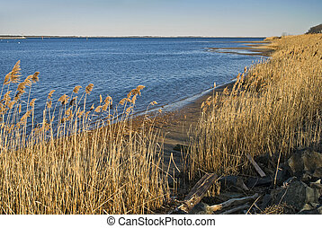 Reeds Along Shoreline - A coastline view of the meadows...
