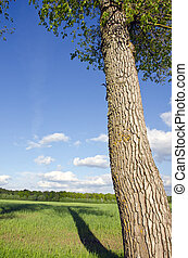 Old ash tree trunk shadow fall on grassland field - Old ash...