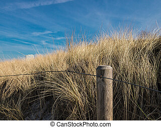 Dune with fence.