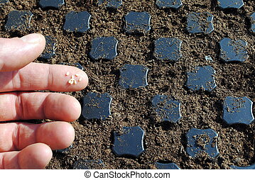 man fingers with seeds over a seedbed