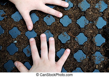 kid hands over a sown seedbed