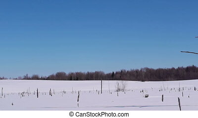 Snowy landscape - Panorama shoot of winter swamp