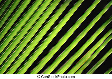 Palm Fronds - Slender green palm fronds from a short...
