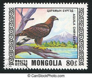 bird Golden eagle