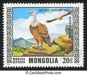 bird Griffon vulture