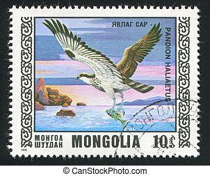 bird Osprey