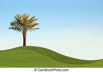 Palm dates - Palm tree with green bermuda