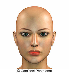 Caucasian Face - Illustration of the face of a caucasian...