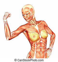 Female Upper Body Anatomy