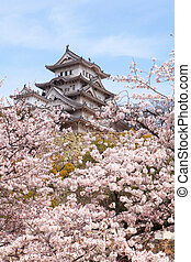 Japan castle with pink cherry blossoms flower