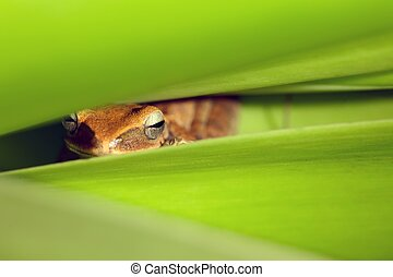 frog hidden in leaves