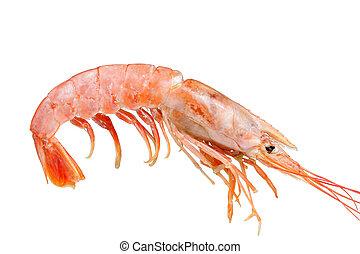 pink shrimp 1 - pink shrimp isolated on white background