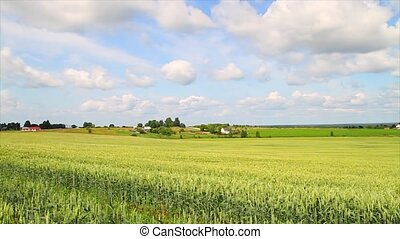 panorama of wheat fields