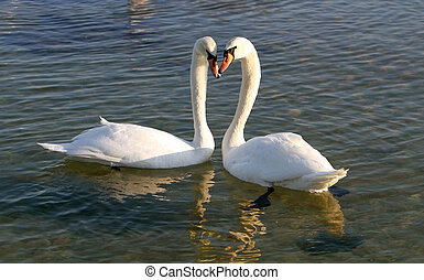 Two swans on the water.