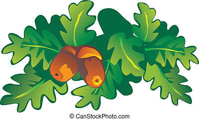 Oak - Oak leaves and acorns Vector art-illustration on a...