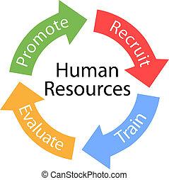 humano, recursos, flechas, recluta, tren, ciclo