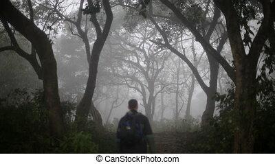 Rainforest Traveler